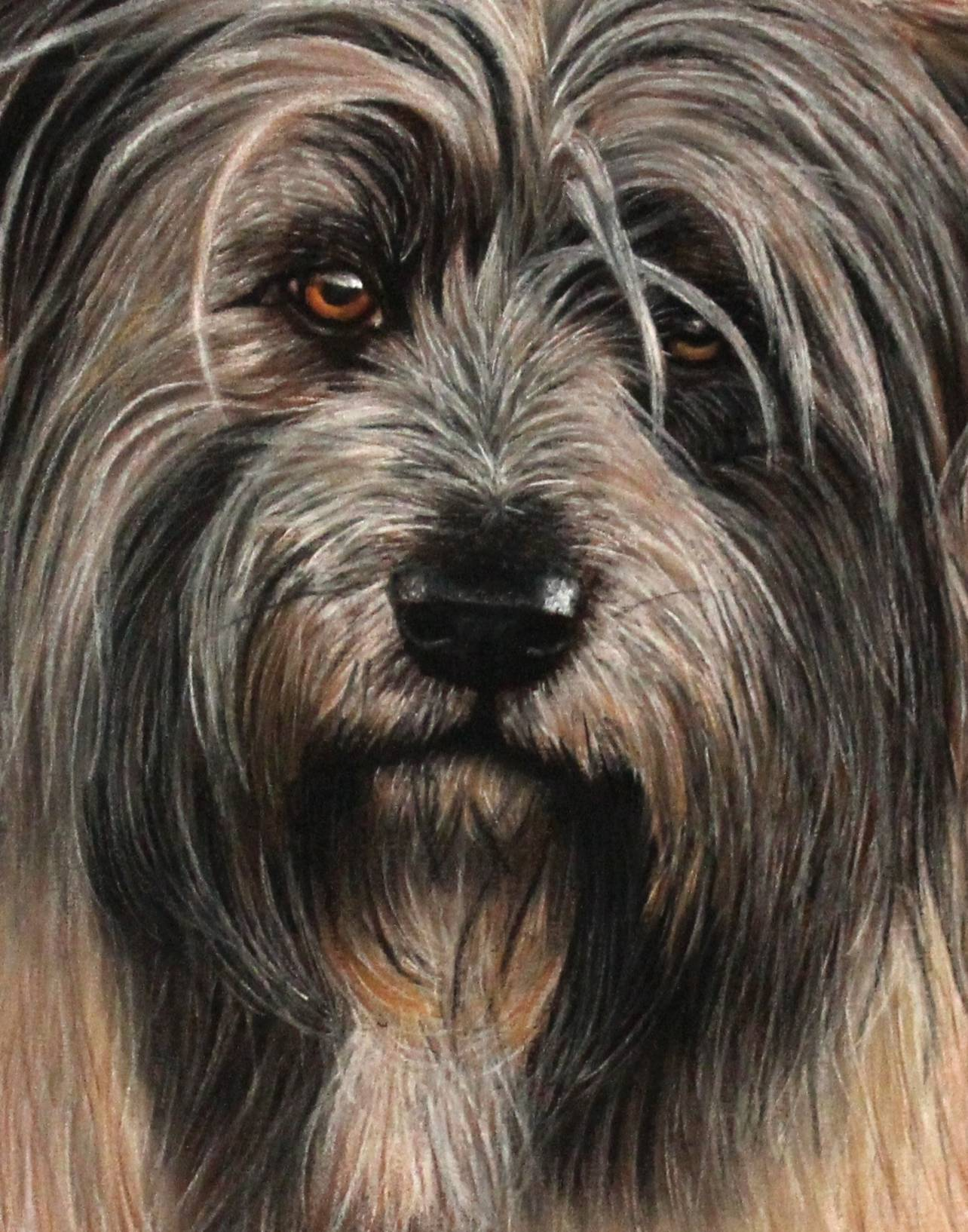 Hundeportrait Detail in Pastellkreide